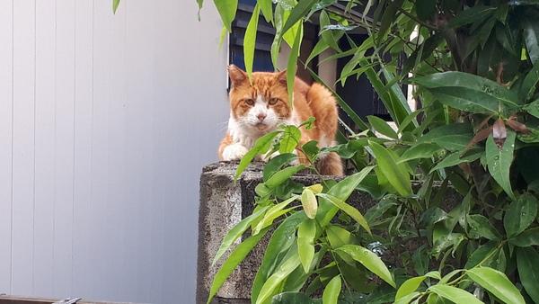 現場管理する猫(=^・^=)